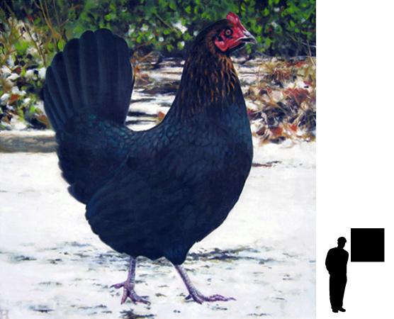 Zwarte kip, olieverf op linnen, 80 x 80 cm., 700,- incl. lijst
